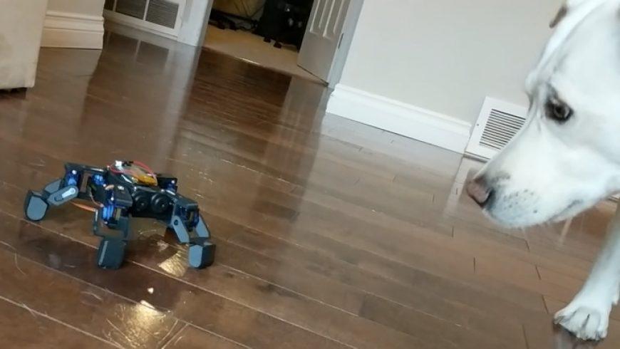 Quadruped Robot Test